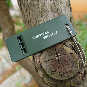 Flat_Whistle_on_tree